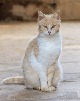 Кошачий монастырь св. Николая в Акротири около Лимасола, Кипр / St. Nicholas Monastery of the Cats in Akrotiri near Limassol, Cyprus / © A.Savin CC BY-SA 4.0, FAL